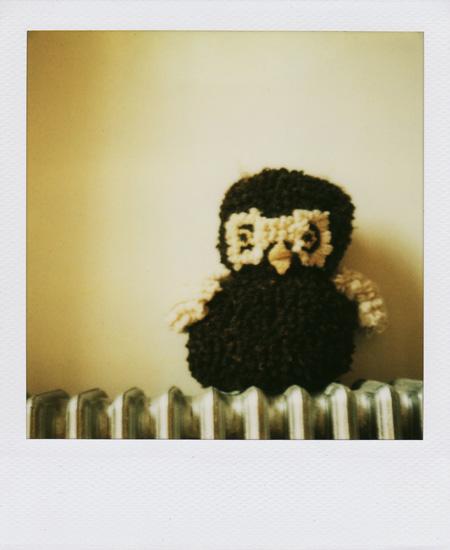 polaroid-teddy1